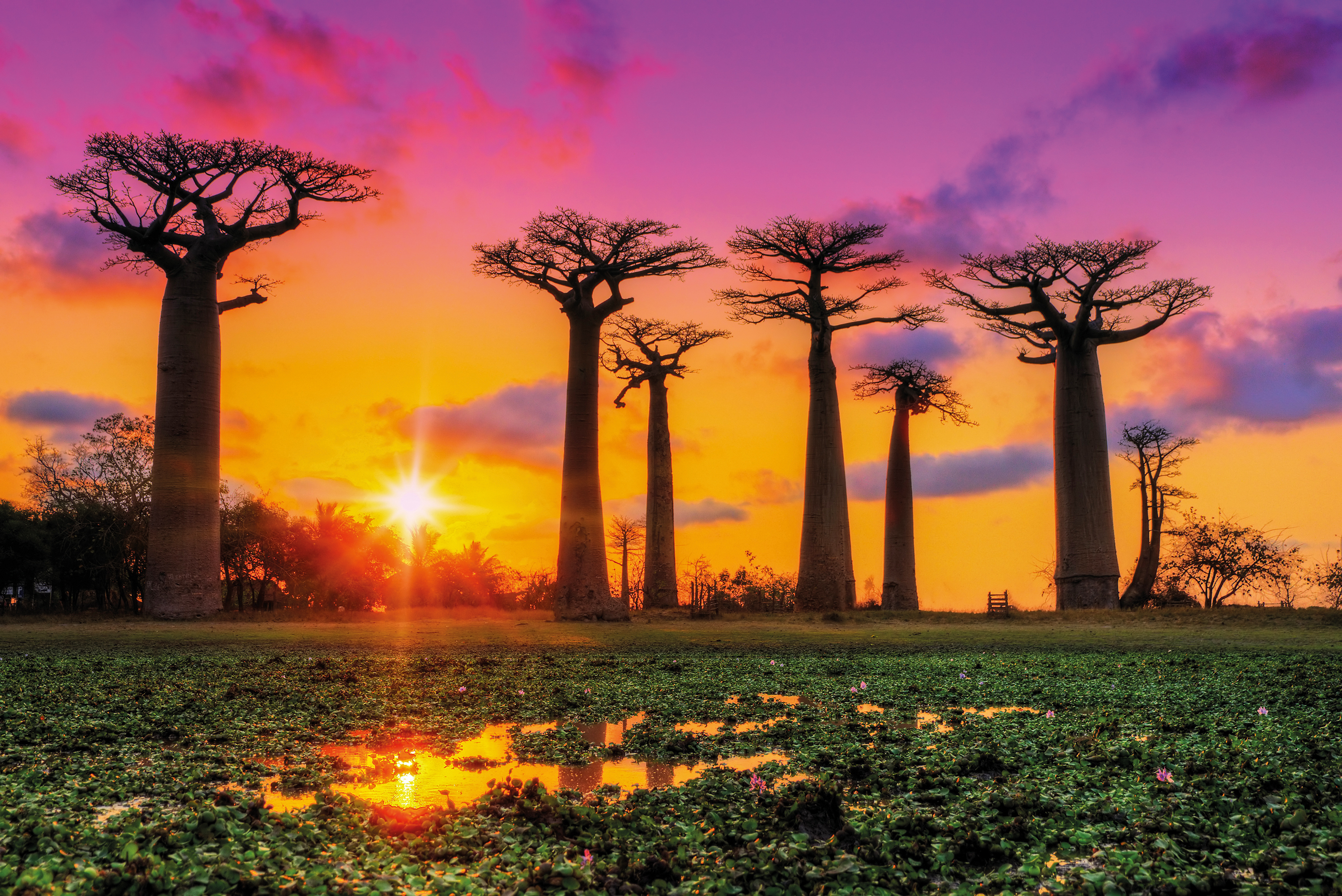 Panoramic view at sunset above Baobab avenue